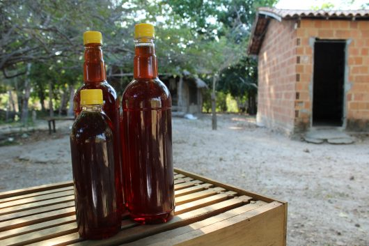 Três garrafas de vidro cheias de mel em cima de uma caixa de madeira. Duas são de 900ml e uma é de 500ml. Ao fundo, tem árvores, chão arenoso e uma casa de alvenaria sem reboco.