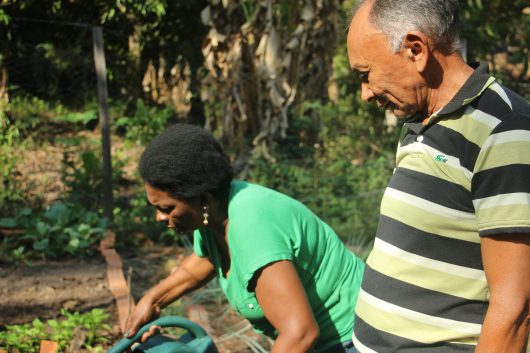 Dona Osmarina e Seu Chico estão proximos aos canteiros, dona Osmarina molhando com o regador e seu Chico olhando a atividade.